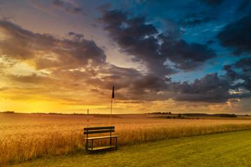 Sunset in fields in summer