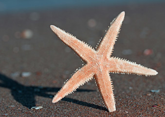 five-pointed starfish on the beach of the sea in summer