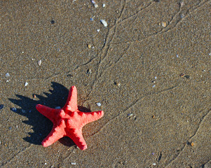 great single red starfish lying on tropical sea Beach
