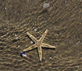 big Starfish underwater tropical ocean 1