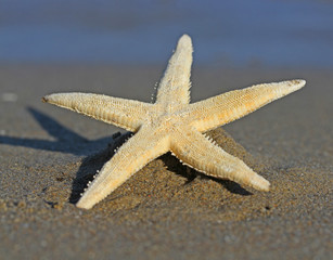 huge Starfish photographed with macro lens
