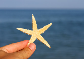 hand that holds the just collection Starfish in the depths of th