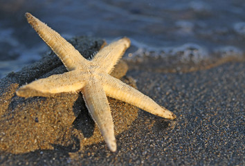 Starfish on the sandy sea beach