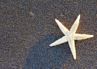 Starfish on sandy beach and free space on the left of the pictur