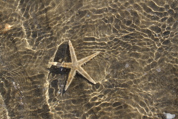spectacular sea star under the warm tropical sea water