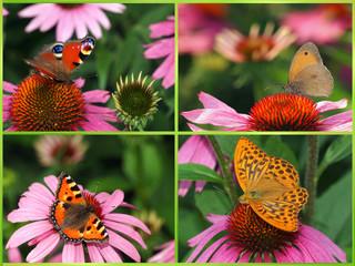 Verschiedene Schmetterlinge