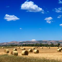 Sardegna, rotoballe di fieno