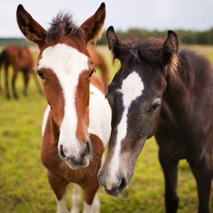Two beautiful horse