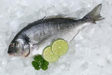 Dorade Fisch auf Eis