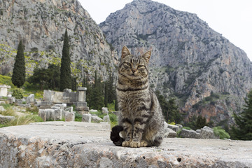 The Temple of Apollo in Delphi Greece