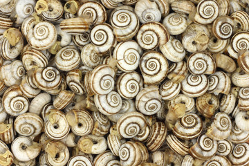 many snail shells abstract background