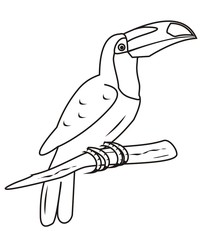 toucan-coloring book