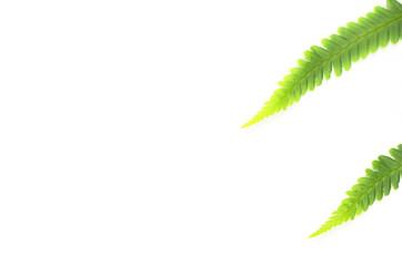 two fern leaf, light paper background