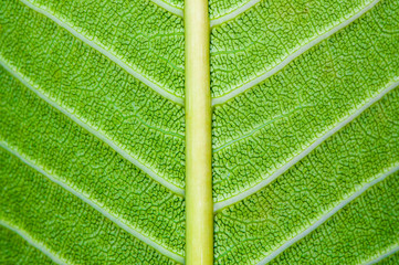 Macro shot of green leaf, nature pattern background