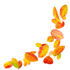 Bright falling autumn leaves isolated on white
