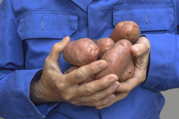 Female hands holding a potato