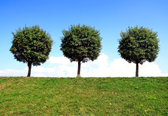 Three trees summer day on the background of blue sky.