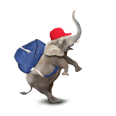 Funy baby elephant going to school.
