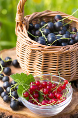 Red currants and black currants outdoor