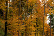 canvas print picture - Herbstwald 06