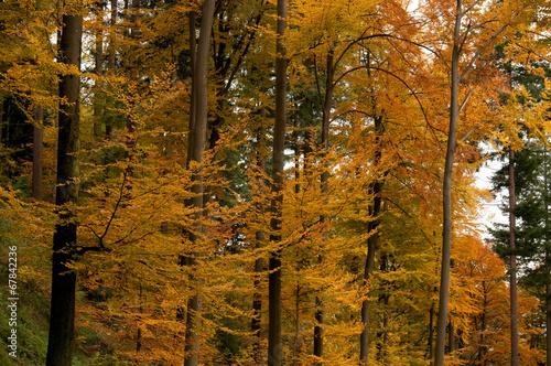 canvas print picture Herbstwald 06