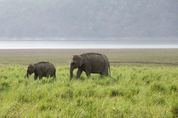 A elephant with her calf