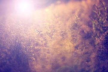 Vintage blurry summer meadow