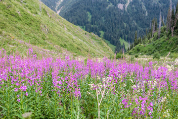 Bright summer flowers in the mountains, good for background