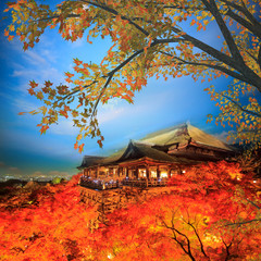 Nice maple with beautiful background