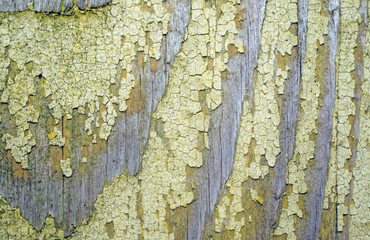 Texture of old wood with remnants of yellow paint closeup as bac