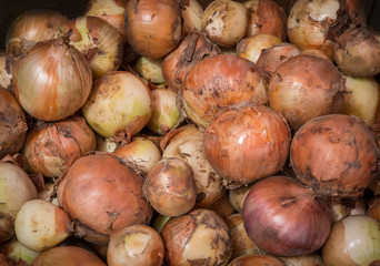 Raw dirty onions. Ripe onions as background.