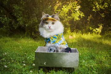 cat fries kebab on the nature