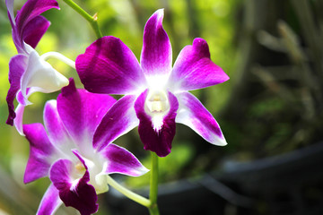Orchids cloes up