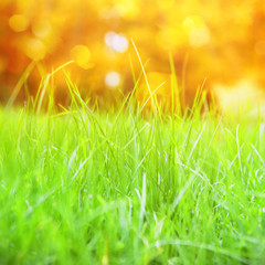 Grass with bokeh.