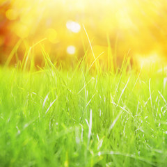 Natural grass background.