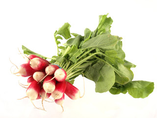 Freshly picked radish on a white background.