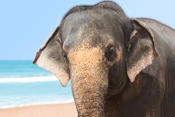 Einsamer Elefant am Meer