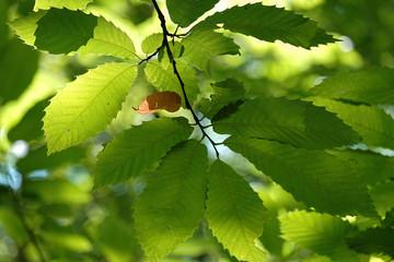 feuilles en contrejour