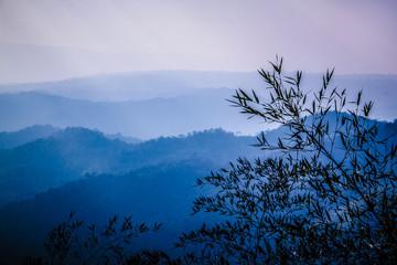 Woodland in Thailand
