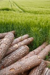 Tree trunks lying in the countryside