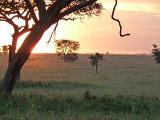 tree serengeti