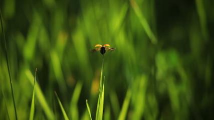 ladybug fall