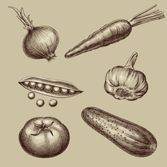 Set of vector vintage hand drawn vegetables