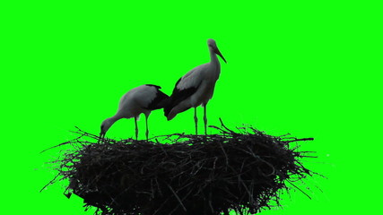 stork in the nest against the green background