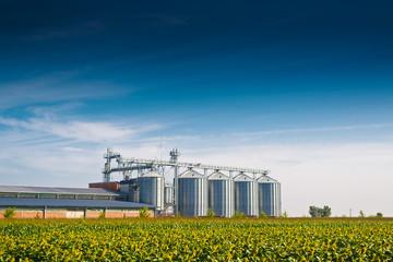 Grain Silos in Sunflower Field