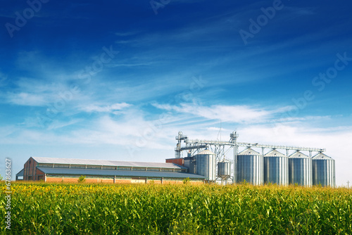 Staande foto Industrial geb. Grain Silos in Corn Field