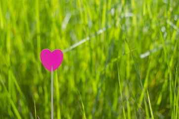One pink heart with grass background