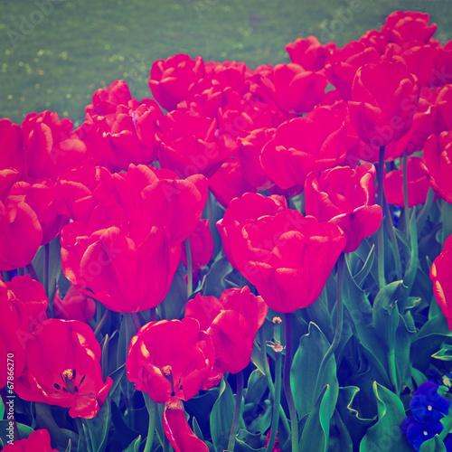Plexiglas Roze Flowers