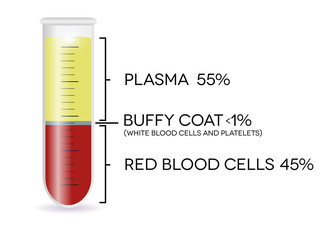 Test tube with blood cells, plasma, buffy coat, red blood cells