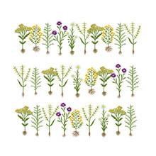 Zielnik kwiaty z korzeniami, szkic do projektowania